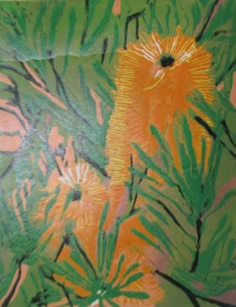 Banksia Beauty