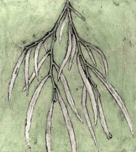 Jacky Lowry - Western Australian Peppermnt Tree