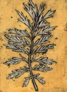 Jacky Lowry - Silky Oak Leaf 2