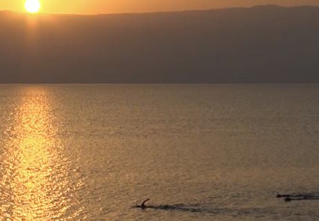 First swim crossing of the Dead Sea