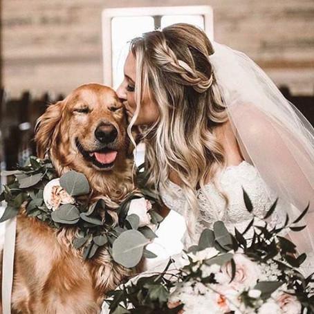 Tu perro se va de boda