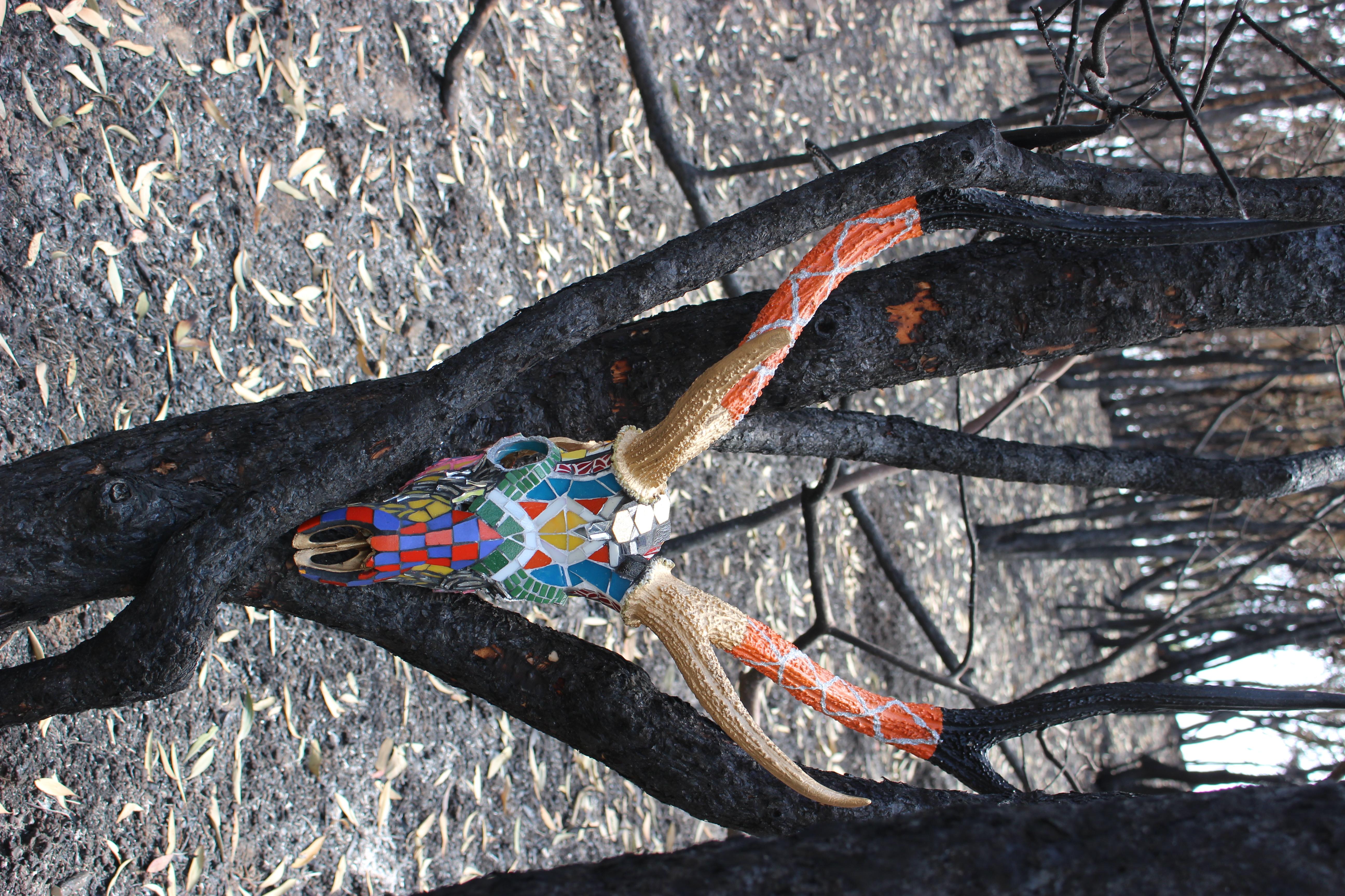installation dans forêt brulée