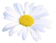 Blomma.png