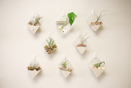 Succulent Wall Planters