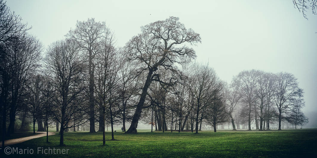 Tree 002317