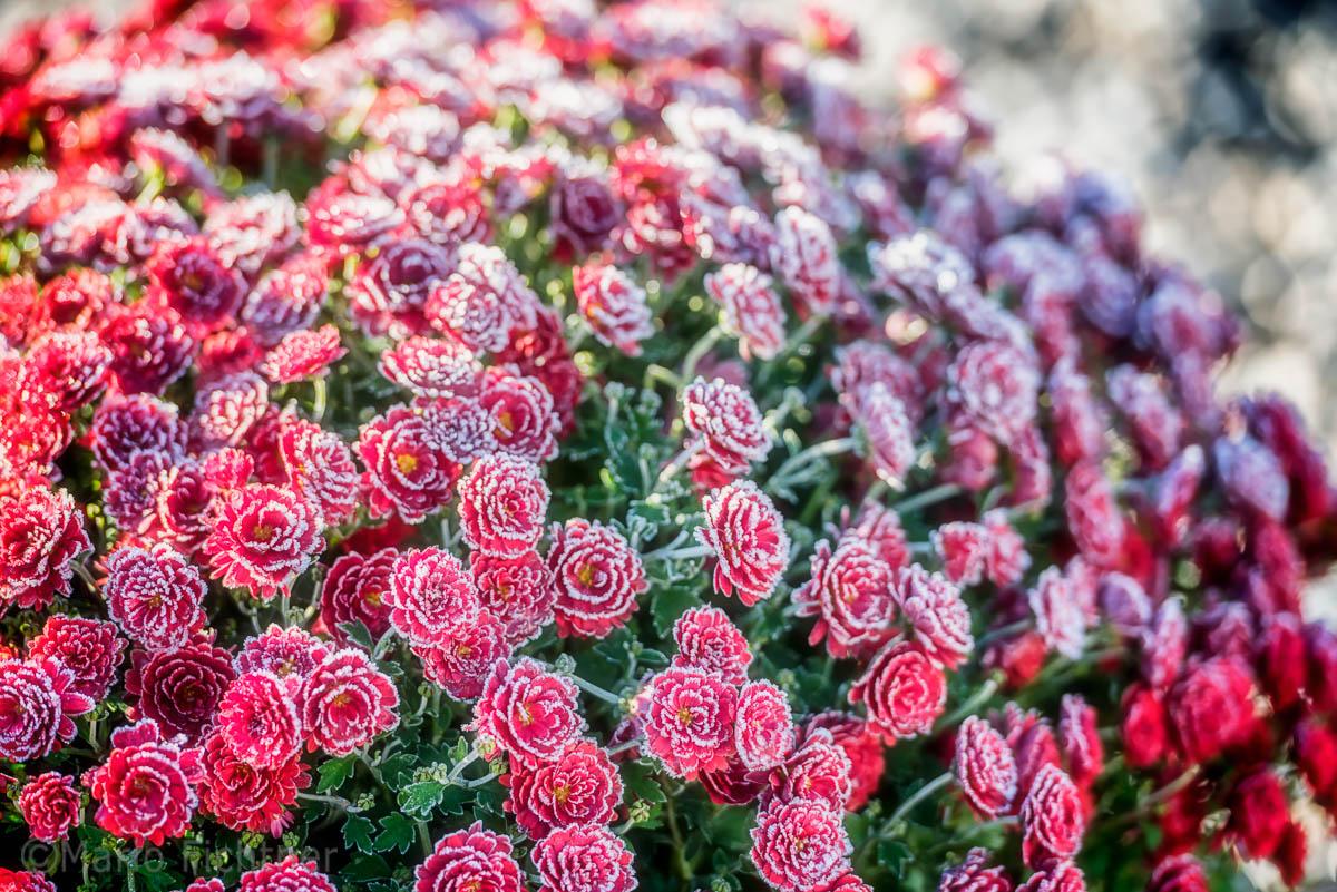 Flowers 999016