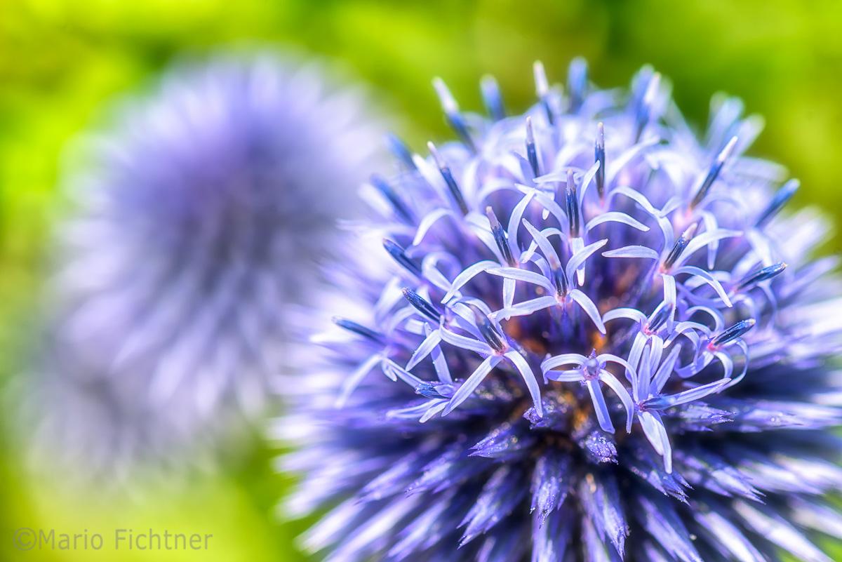 Flowers 4283.jpg
