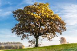 Tree 973016
