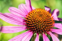 Flowers 4441.jpg