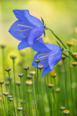 Flowers 6735