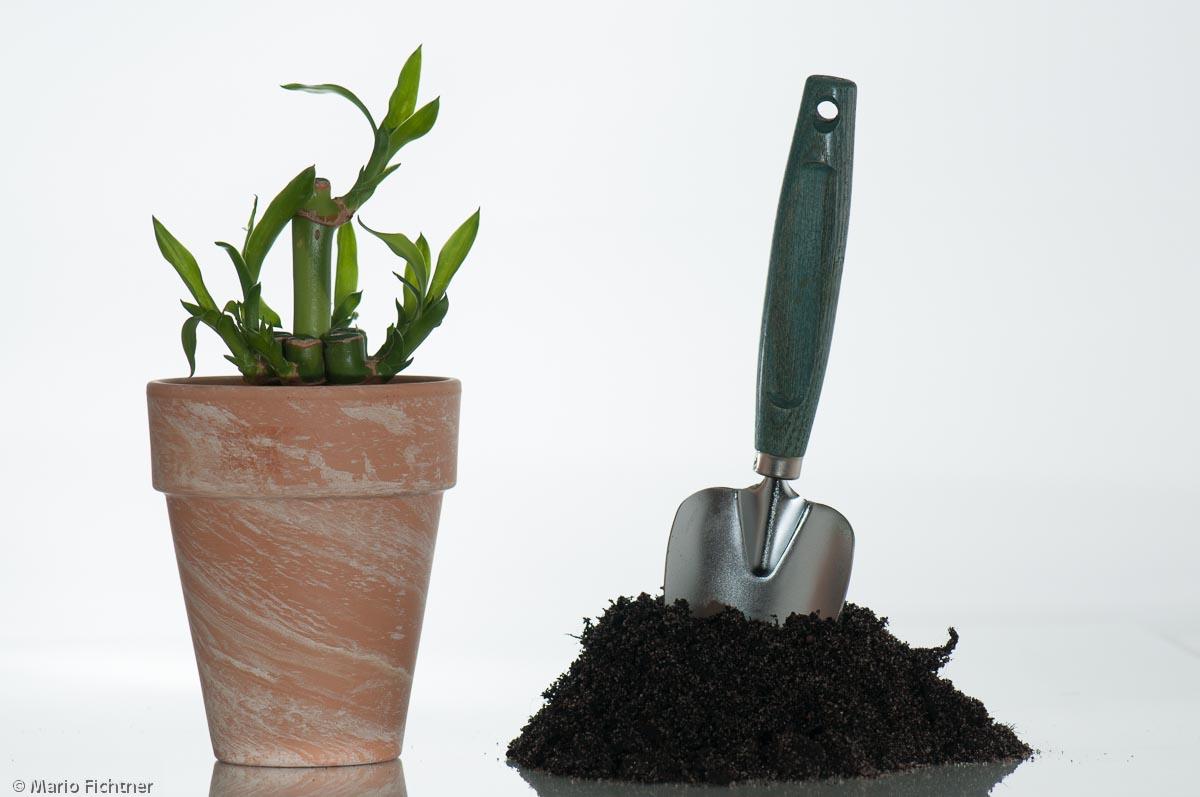 pflanze-erde-boden-element-8026.jpg