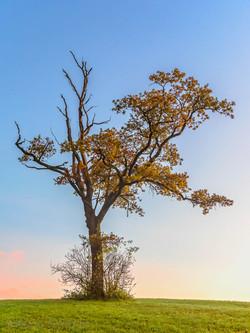 Tree 967316