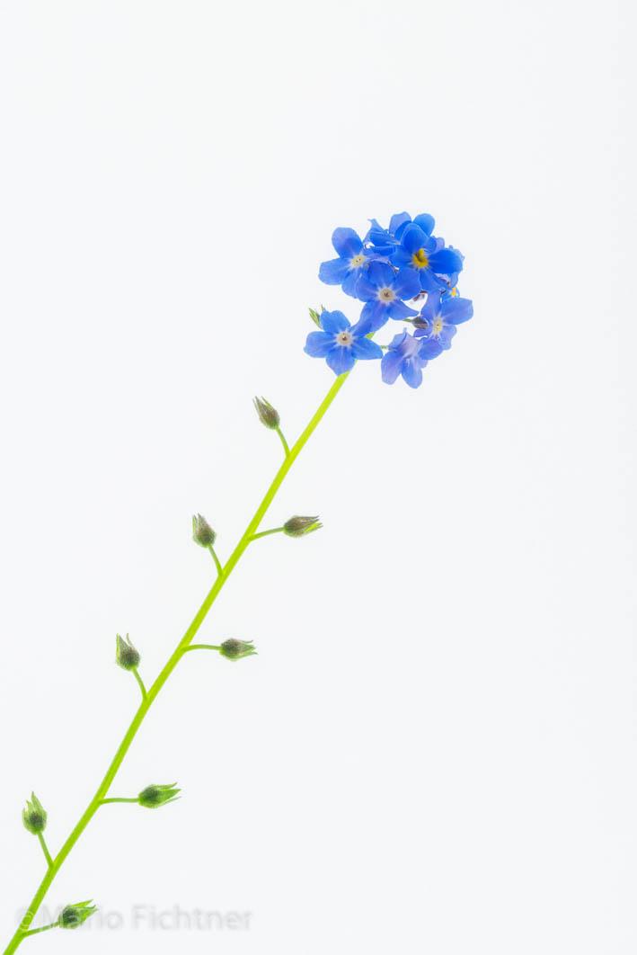 Flowers 228215