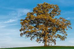 Tree 973816