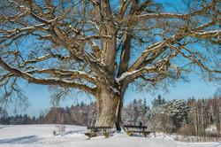 Tree 903017
