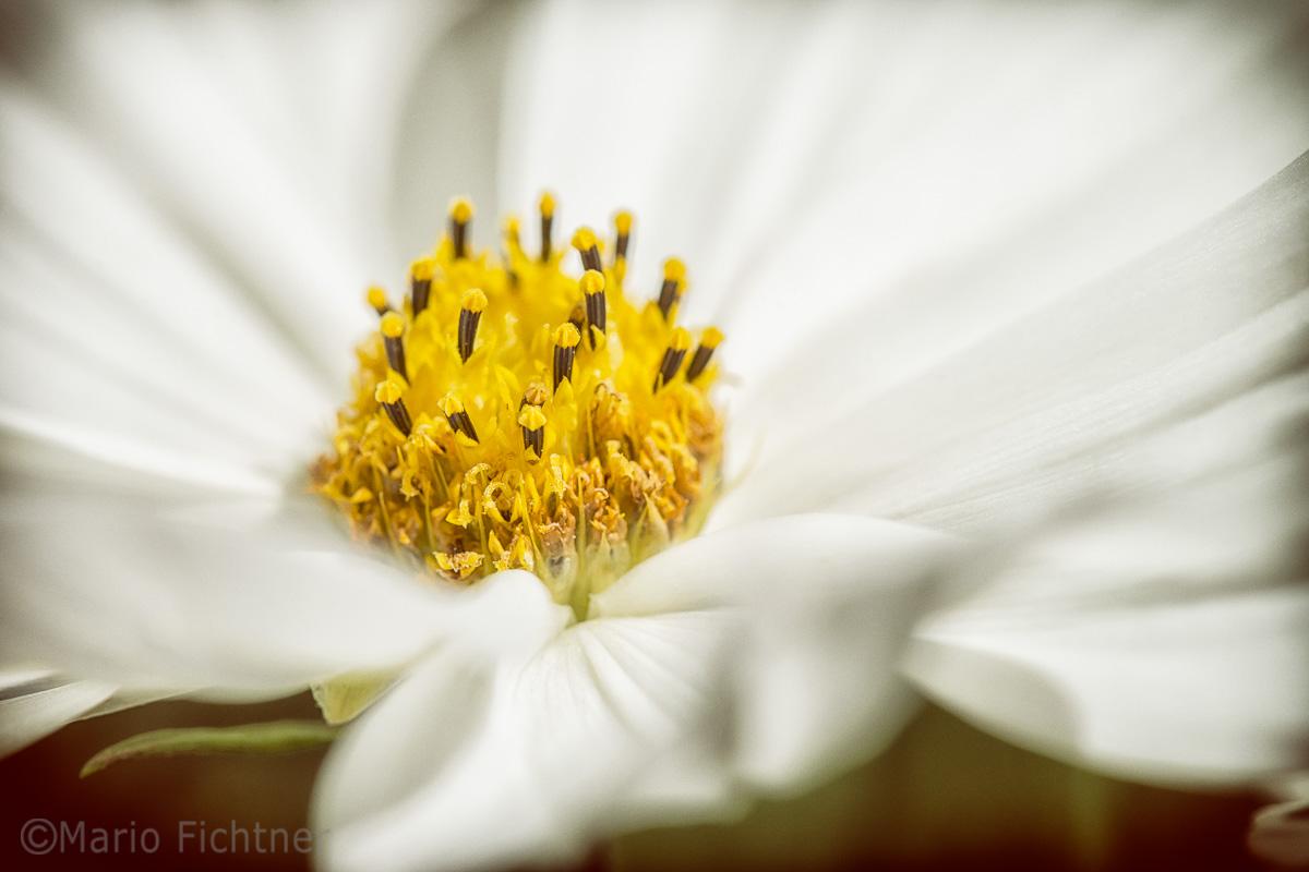 Flowers 4445.jpg