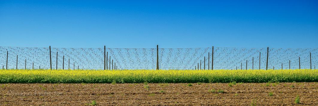 Farmland 053719