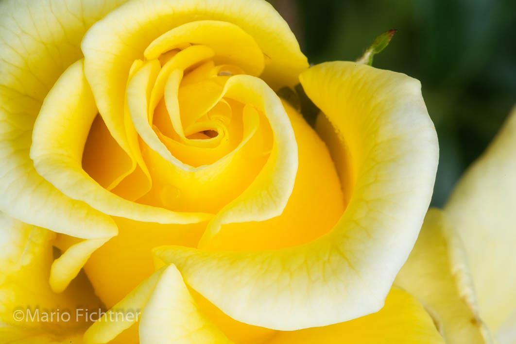Flowers 254118