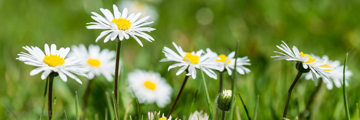 Flowers 1670.jpg