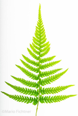 Plants 22531518