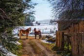 Pferde im Winter 218019.JPG