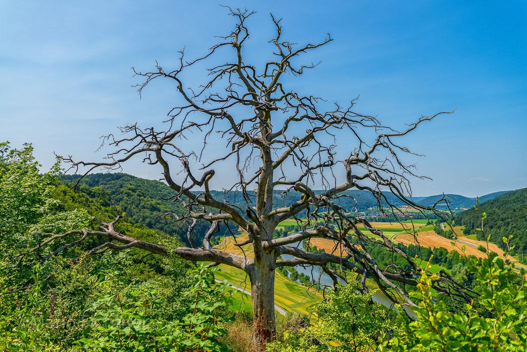 Tree 191113
