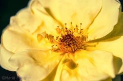 Flowers 4300.jpg