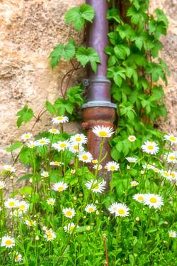 Flowers 6080