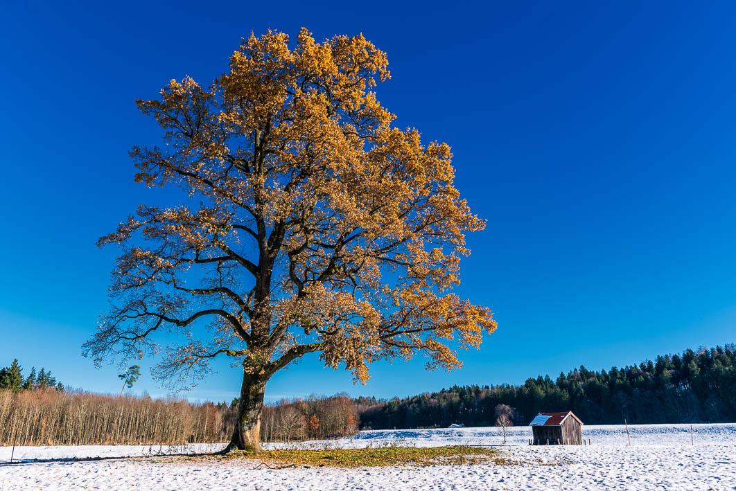Tree 222317