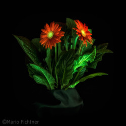 Glowing flowers 7073