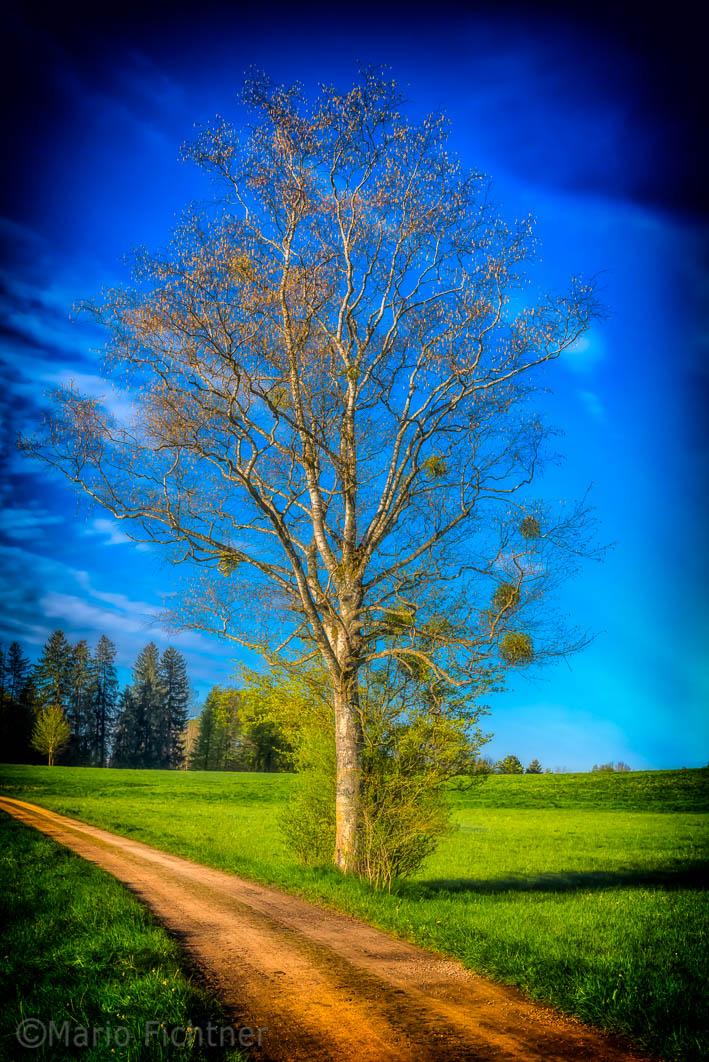 Tree 5612