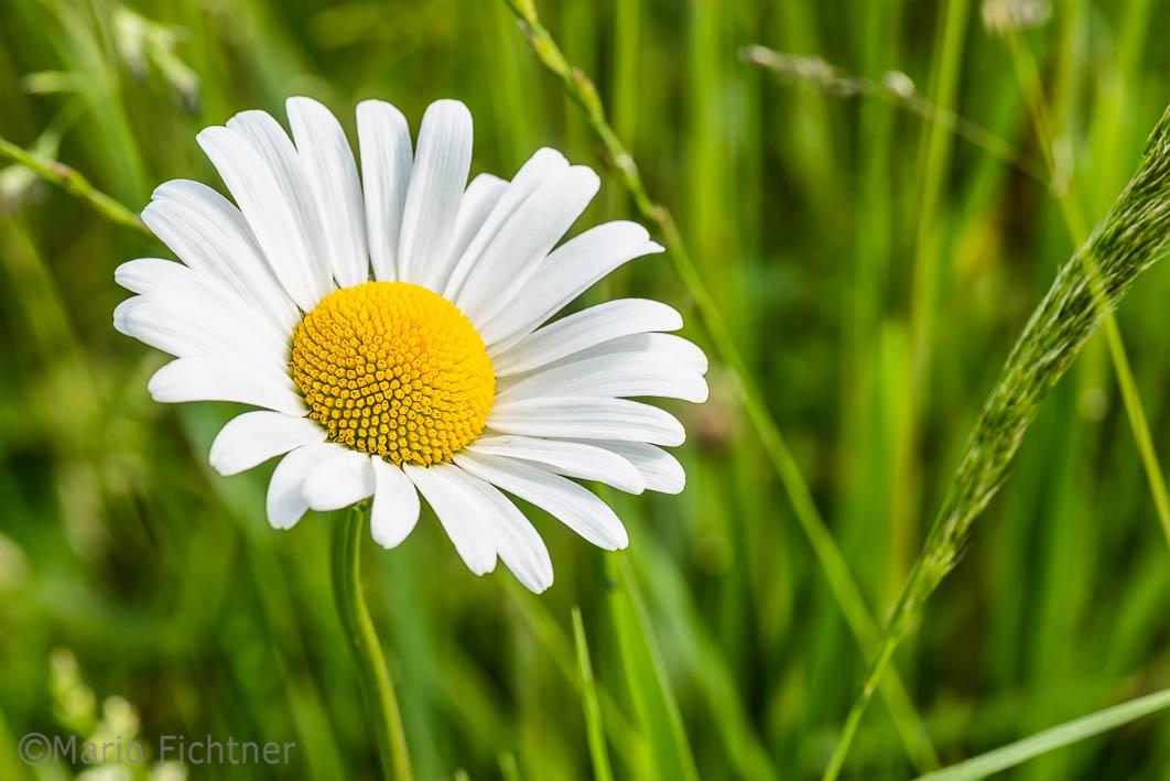 Flowers 075117