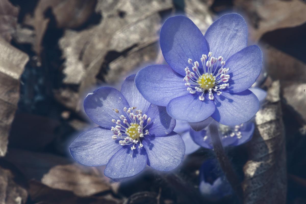 bluete-pflanze-lila-6588.jpg