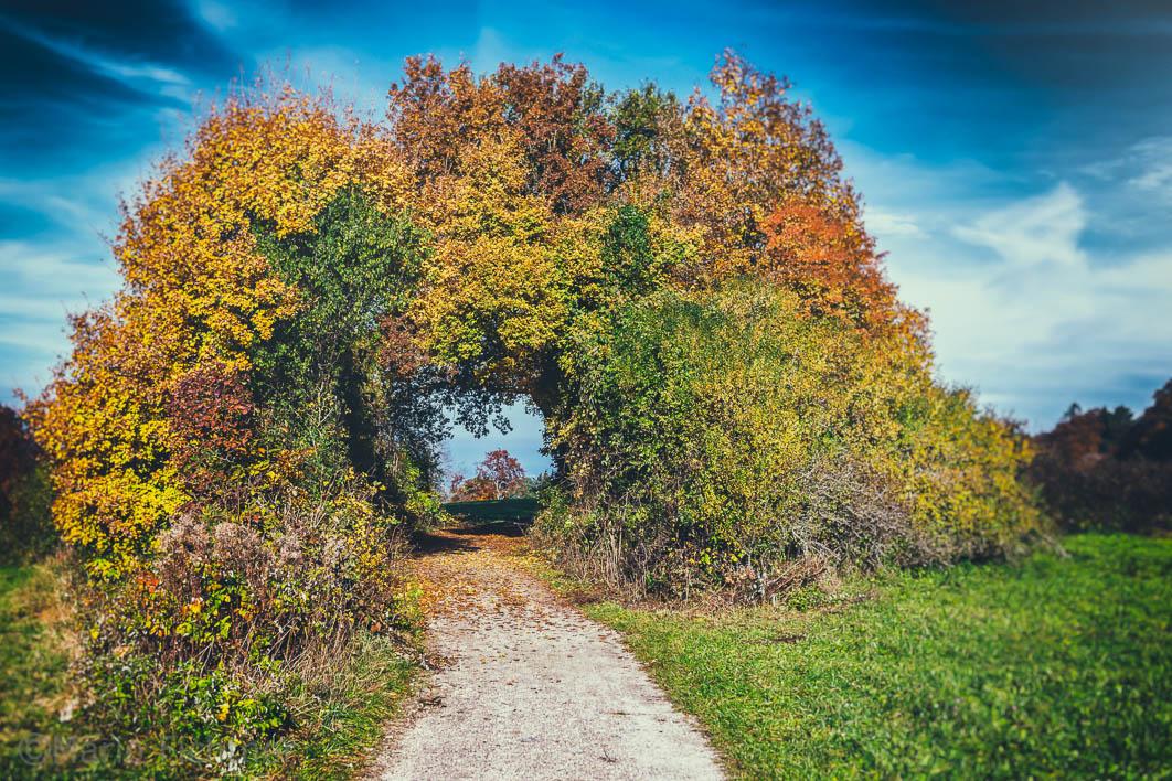 Way to autumn 978816
