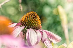 Flowers 4431.jpg