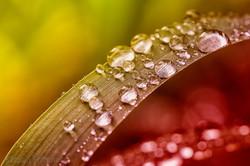 Dewdrops 4825.jpg