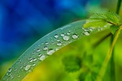 Dewdrops 4808.jpg