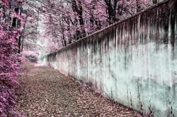 Magenta wall.jpg