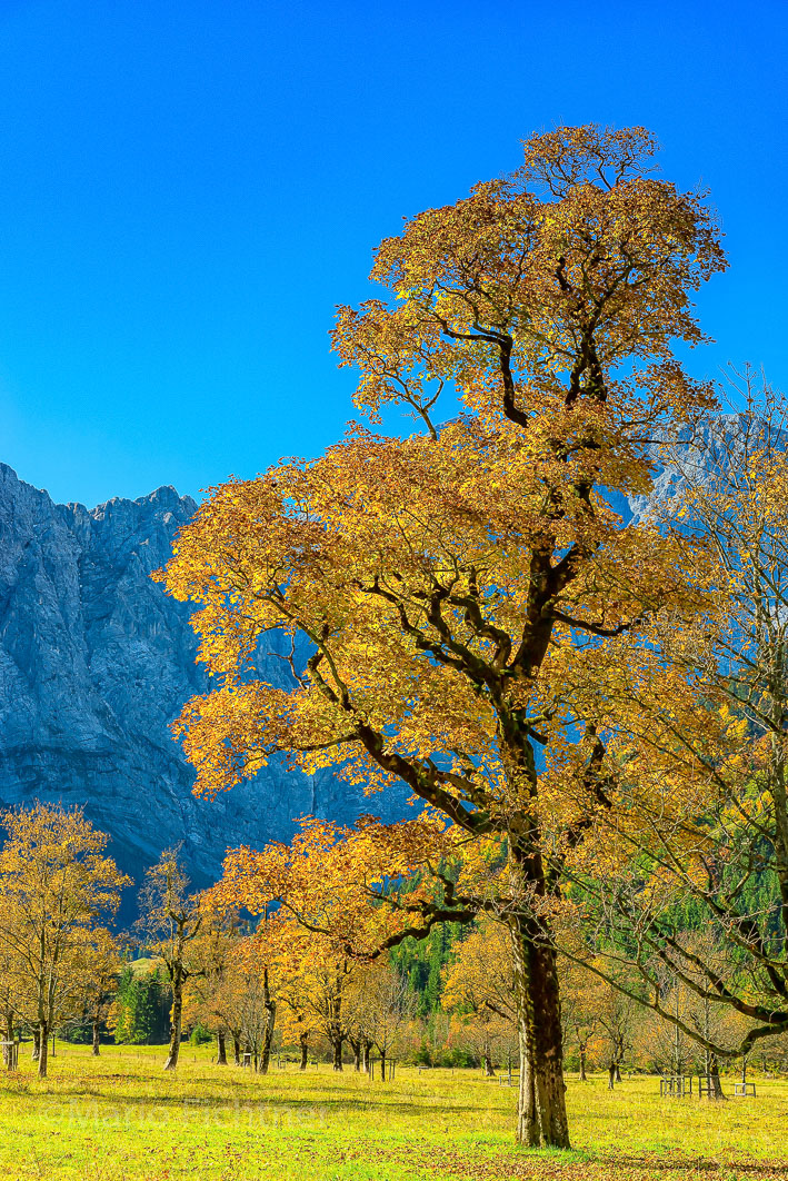 Tree 313918