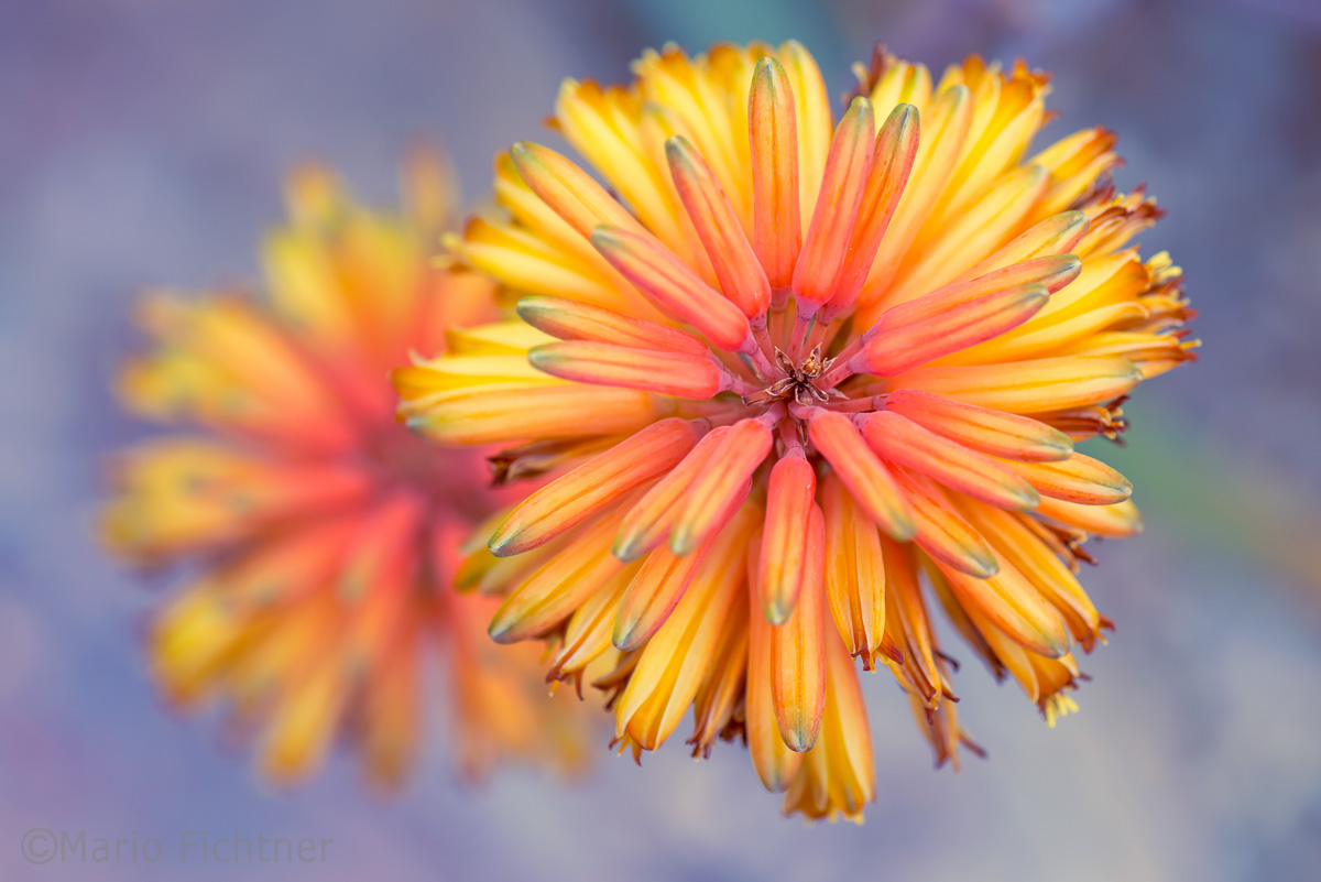bluete-makro-orange-gelb-0326.jpg