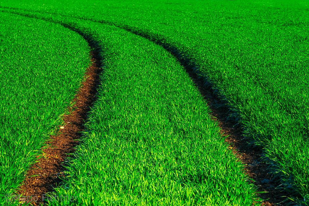 Green away 069817