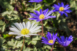 Flowers 051217