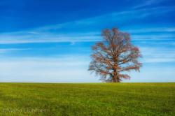 Tree 141418