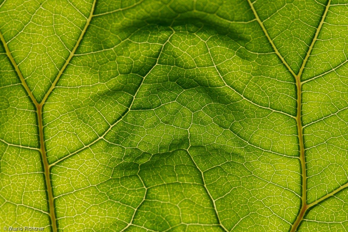 abstrakt-pflanze-blatt-gruen1018.jpg