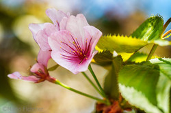 Flowers 054617