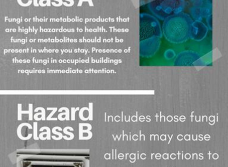 Mold Concerns? Read more here
