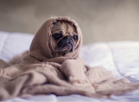 Where to Take Your Sick Pet in Starkville