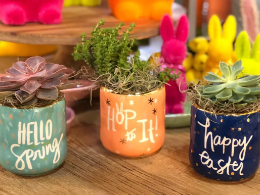 All About Succulents - and Why You Need One