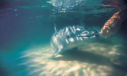 Tin Can Bay Dolphin feeding