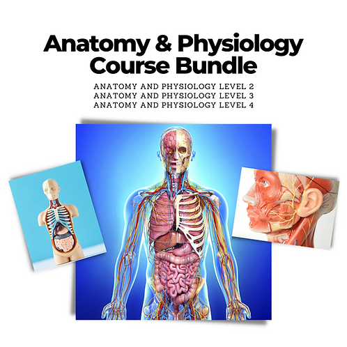 Anatomy and Physiology Level 2, 3, & 4 Course Bundle